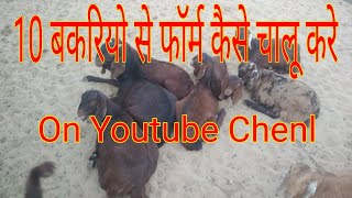 Download Goats kids |care of baby goats | बकरी के