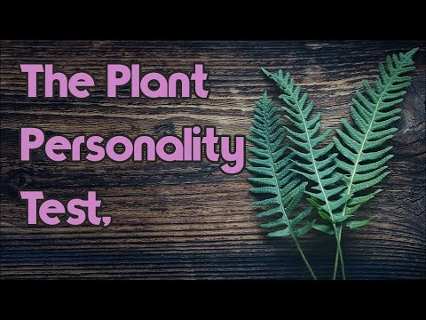 Personality Test: The Potted House Plant
