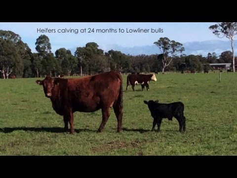 Trevor Caithness - Building soil fertility for pasture production