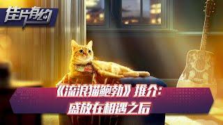 《流浪猫鲍勃》推介:盛放在相遇之后【佳片有约 | 20200506】