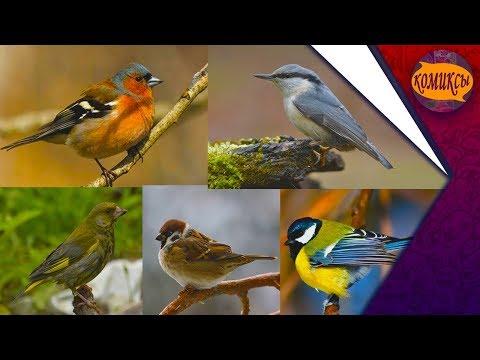 Воробьи и синицы, и другие птицы.
