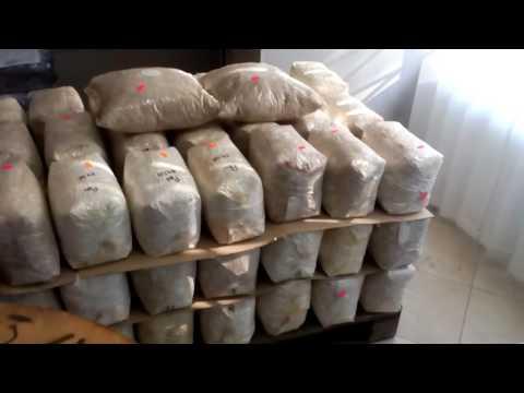 Мицелий грибов в Украине. Сравнить цены, купить