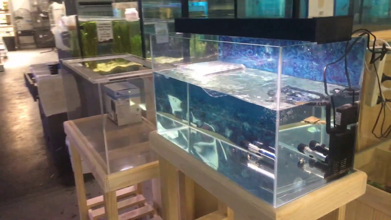 Baby Pet Turtles Melbourne | Turtle Package - YouTube