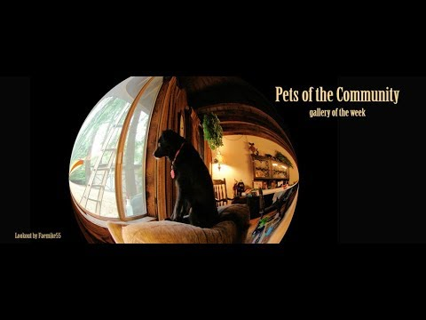 Renderosity Gallery of the Week for Nov 20, 2017 - Pets of the Community