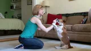 "Raise The Woof Dog Training ""tips And Tricks: Sit Pretty Or Beg"""