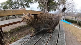公園の芝生でキジトラ猫が寝ていたのでナデナデしたらベンチまで付いてきた