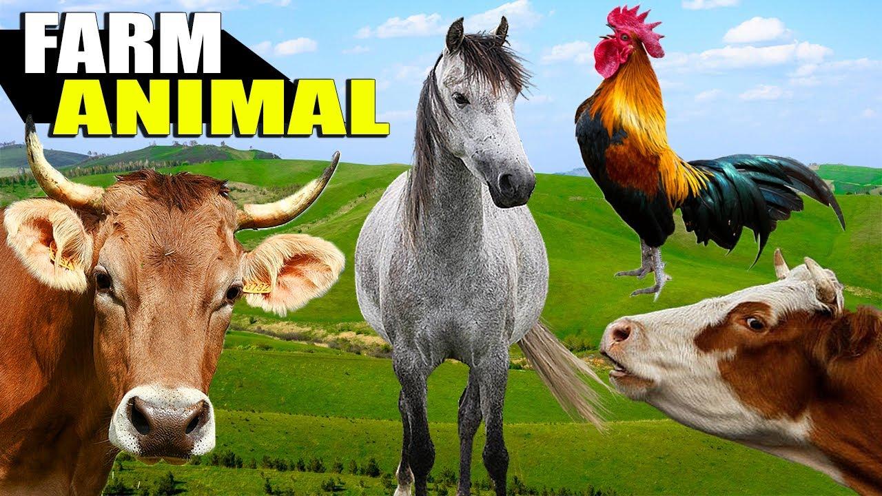 10 Animais Domesticados numa Fazenda - Veja os Animais e Ouça Seus Sons Naturais