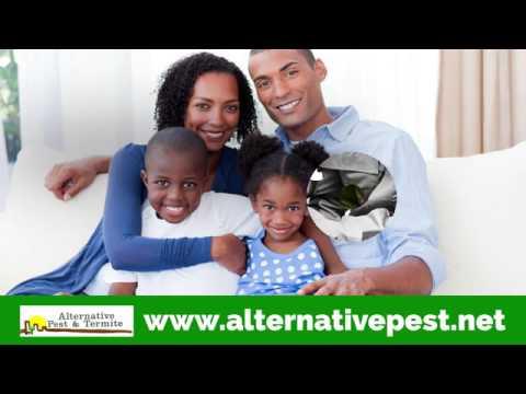 Alternative Pest & Termite Control Camp Verde AZ 86322