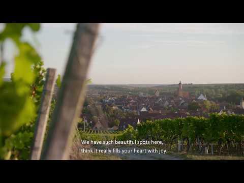 Enjoy Frankens vineyards on hilly slopes lining the Main River