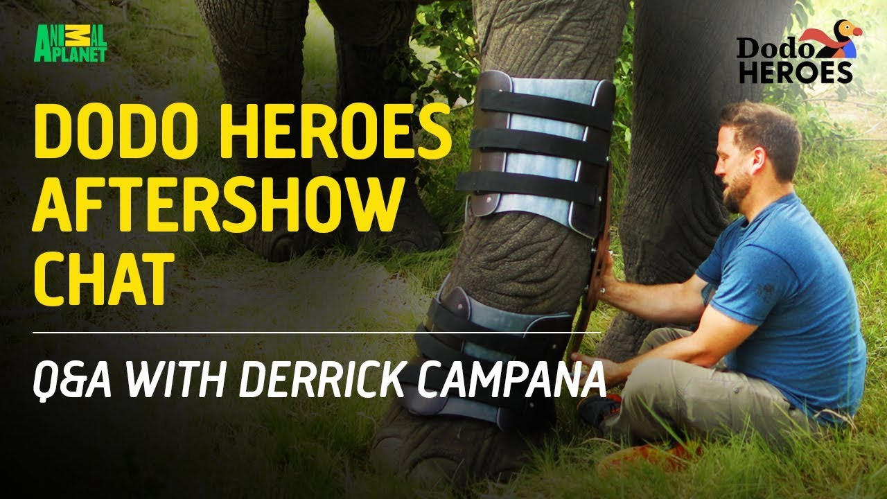Dodo Heroes Aftershow Chat | Q&A With Derrick Campana