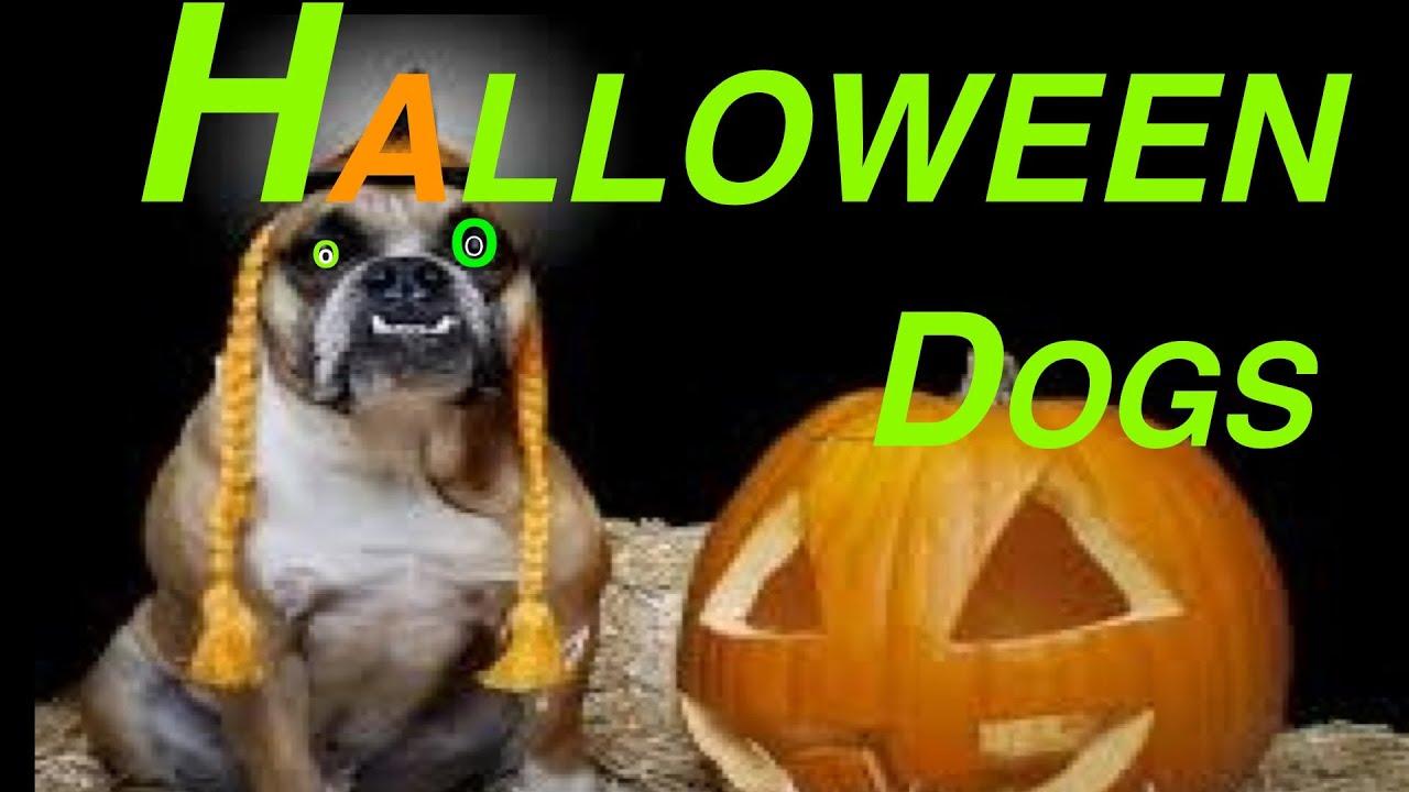 Download Wallpaper Halloween Puppy - maxresdefault  Trends_1009633.jpg