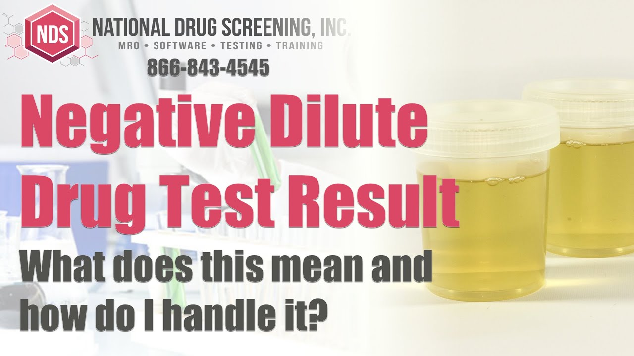 Piss test diluted