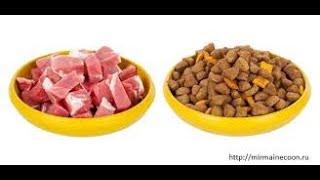 Корм или натуралка,что лучше?/Питание кошки и собаки/Что входит в питание питомца?