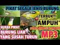 Suara Pikat Semua Jenis Burung  Mp3 - Mp4 Download