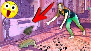 ПЕРВЫЙ РАЗ В ДОМЕ ВЫПУСТИЛА Кроликов Эльза и Лизун | Дом Призрак Elli Di Pets