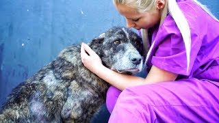 GIANT dog spent her life in a landfill... UNTIL A YOUTUBE VIDEO SAVED HER LIFE !