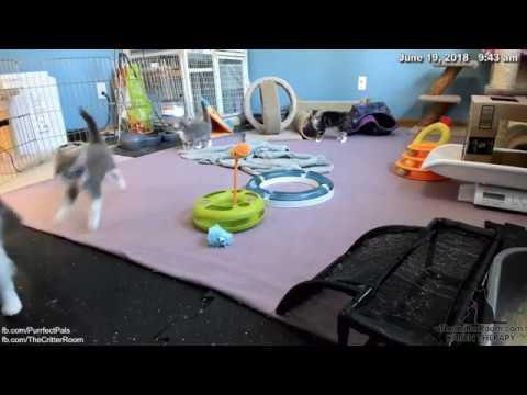Guardian Kittens - Pouncy Mama