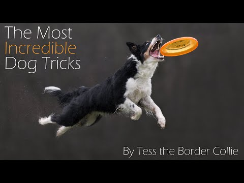 The Most Incredible Dog Tricks EVER || Tess the Border Collie