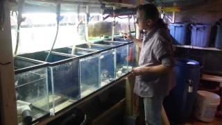 #1997 Building A New Fishroom! Part Six Carls Aquarium