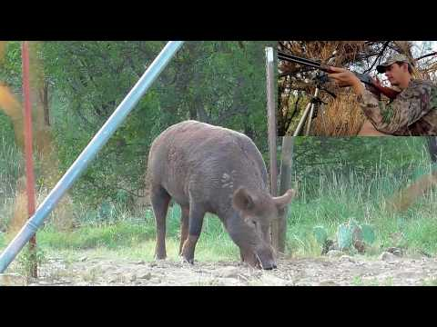Winchester Lever Action 30 30 Puts A Big Hog Down!  slow motion bullet impact