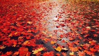 3시간 연속 듣기 | 차가운 비 그리고 가을 | 책 읽기 좋은 연주곡 | 편안한 BGM