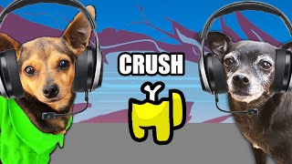 Dogs Play Among Us to Reveal Their Crush is Missing - PawZam Dogs
