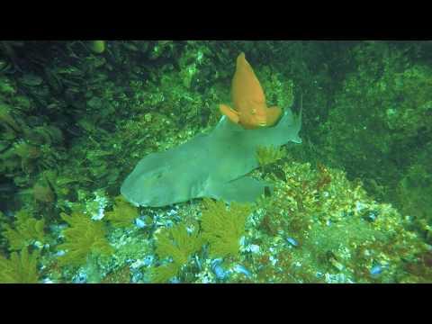 Reef Diving Santa Monica Bay