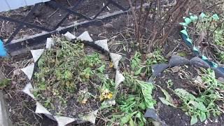 укрытие хризантем на зиму