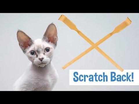 Funny Devon Rex kitten enjoys a back scratcher