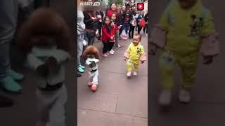 Китайская собака которая похожа на человека