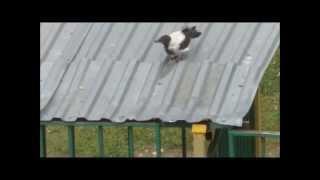 Игры черно белой вороны Из цикла фильмов Из жизни серой вороны фильм 4 й