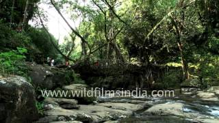 Tourists visit Single Decker Living Root Bridge in Meghalaya