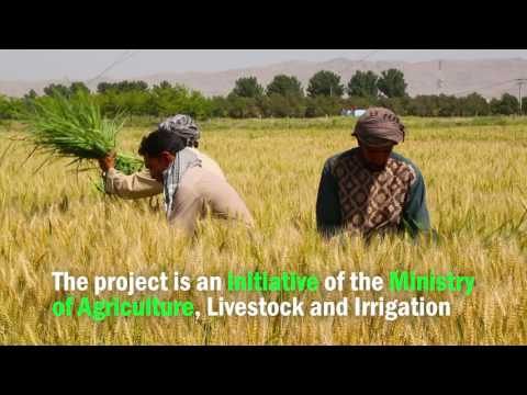 Supporting Agriculture Productivity in Afghanistan