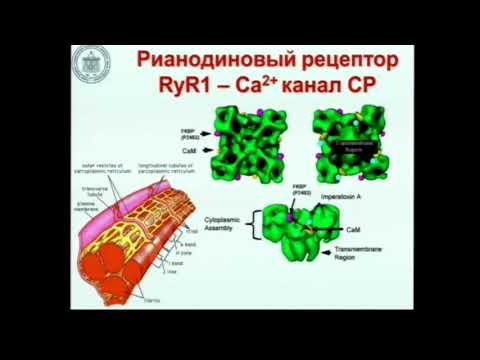 Злокачественная гипертермия Лебединский К.М.