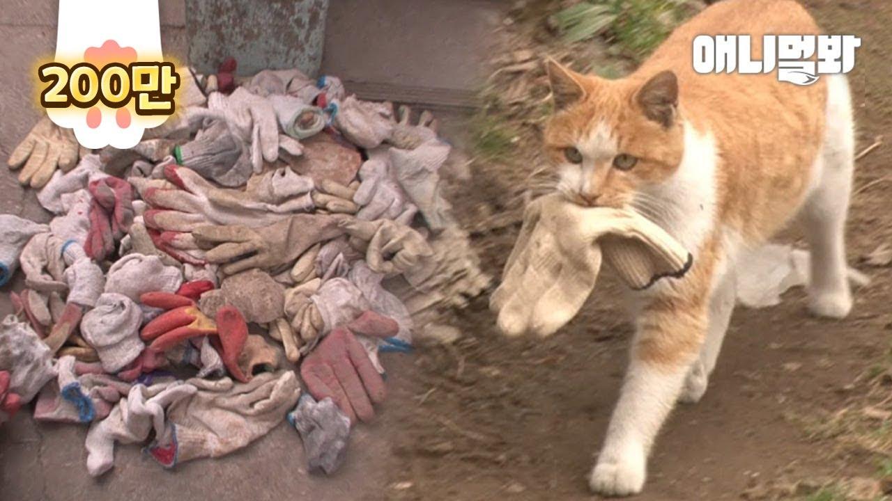 แมว ตอบแทน ผู้ช่วยชีวิตให้มันรอด 생명의 은인에게 보은하기 위해 길고양이가 매일 훔친 것 (감동주의..)ㅣWhat Stray Cat Brought Ever