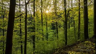 269 Time Lapse Black Forest Sunset Green Trees | Zeitraffer Schwarzwald Sonnenuntergang Bäume 4K