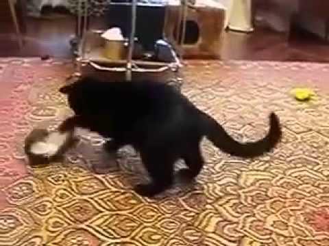 Прикольные кошки  Кошка и горностай весело играют Забавно смотреть!!