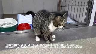 Кот с отрубленными капканом лапами после операции Ветеринары сшили новые подушечки на культях