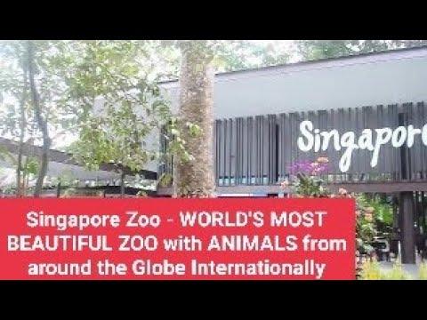 Singapore Zoo - WORLD'S MOST BEAUTIFUL ZOO with ANIMALS from around the Globe Internationally
