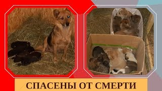 Gambar cover Щенки, которых хотели убить/Puppies which people wanted to kill