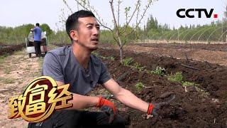 《致富经》 20200619 他敢为人先 双产业赚钱  CCTV农业