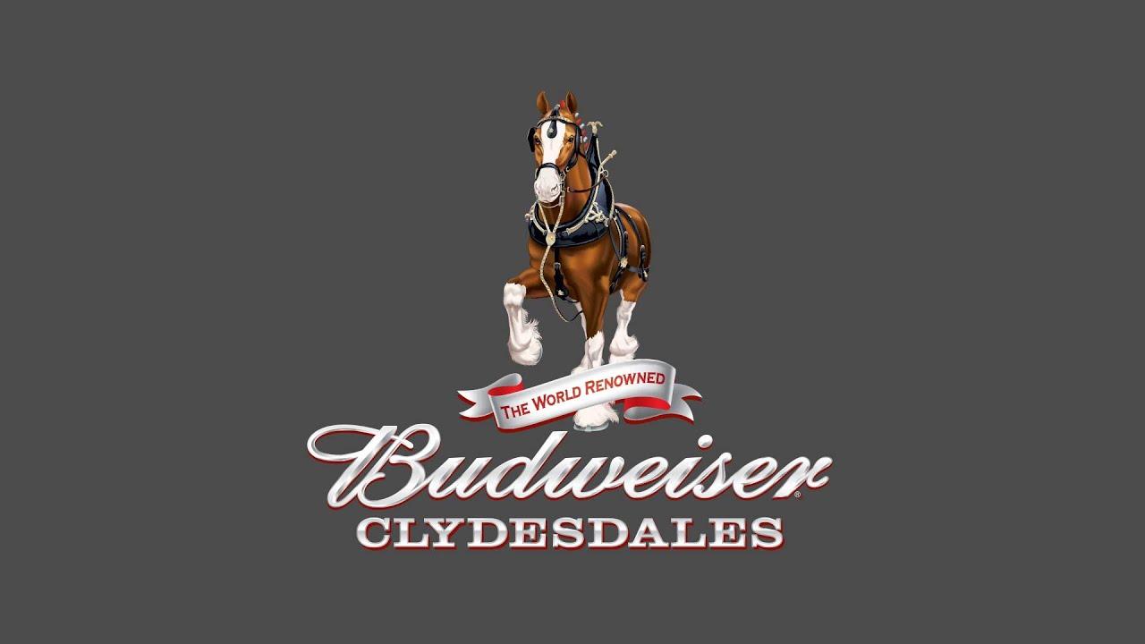 budweiser clydesdales logo wwwimgkidcom the image
