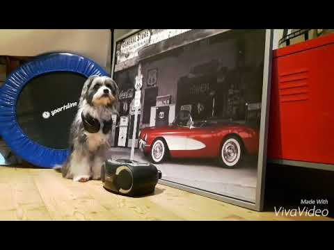 Filmhund Tom Tom / CD Player