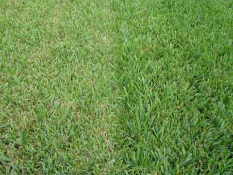 #2 Most Common Landscape Mistake - Improper Mowing