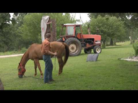 Desensitizing your horse to sudden motion, using archery, OPM Opium Horse Other Peoples Mistake