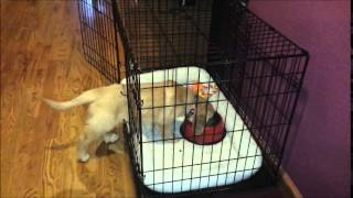 5 Steps To Crate Training Your Dog