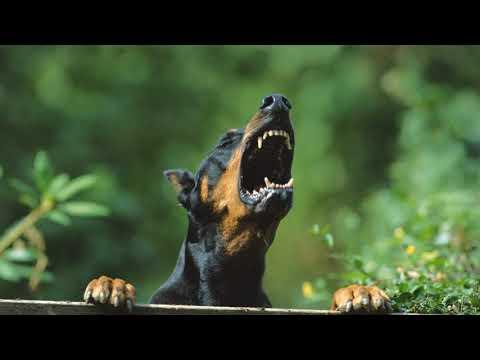 Вопрос: Отпугивает ли лаванда собак?