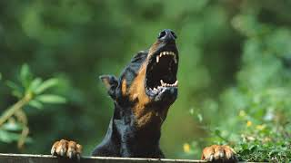 Какие запахи не любят собаки, как их отпугнуть?