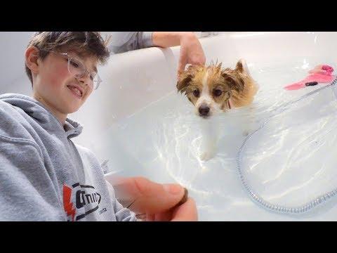 Mein Hund FLASH