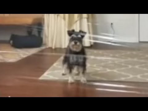 Clever pup overcomes invisible dog challenge